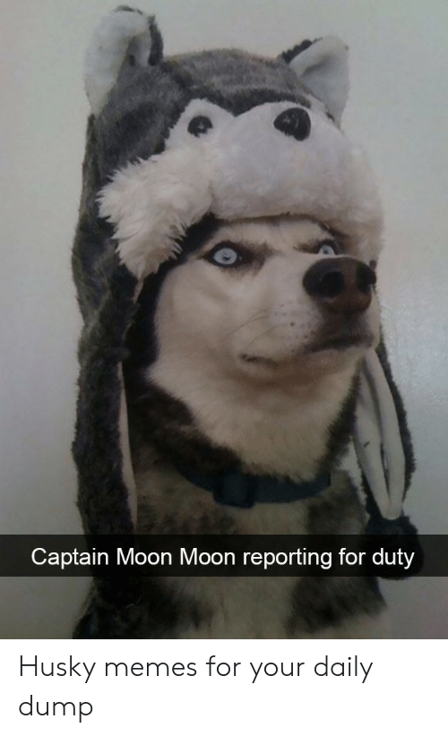 Husky: Captain Moon Moon reporting for duty Husky memes for your daily dump