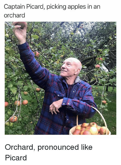 picard: Captain Picard, picking apples in an  orchard Orchard, pronounced like Picard