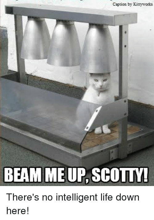 Life, Memes, and 🤖: Caption by Kittyworks  BEAM ME UP SCOLLM There's no intelligent life down here!