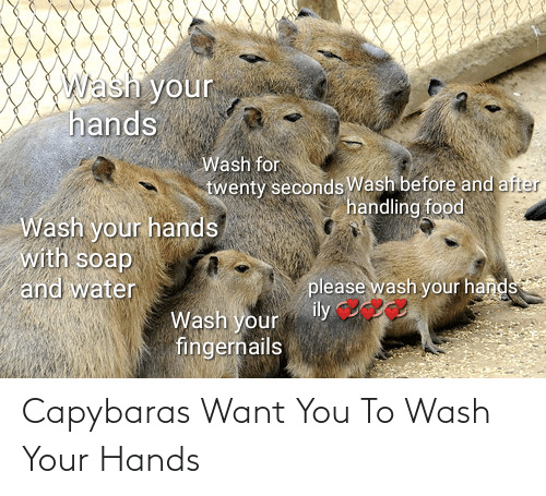Wash: Capybaras Want You To Wash Your Hands