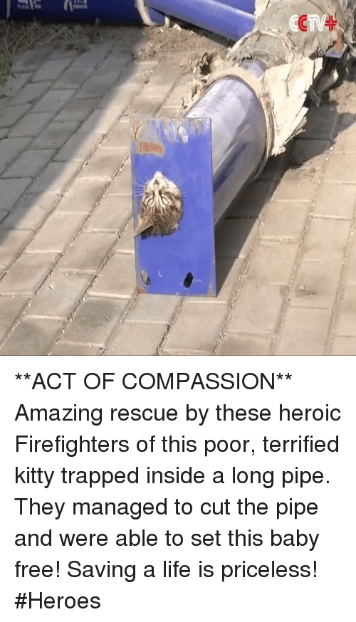 Baby, It's Cold Outside: (Car  'H **ACT OF COMPASSION** Amazing rescue by these heroic Firefighters of this poor, terrified kitty trapped inside a long pipe. They managed to cut the pipe and were able to set this baby free! Saving a life is priceless! #Heroes