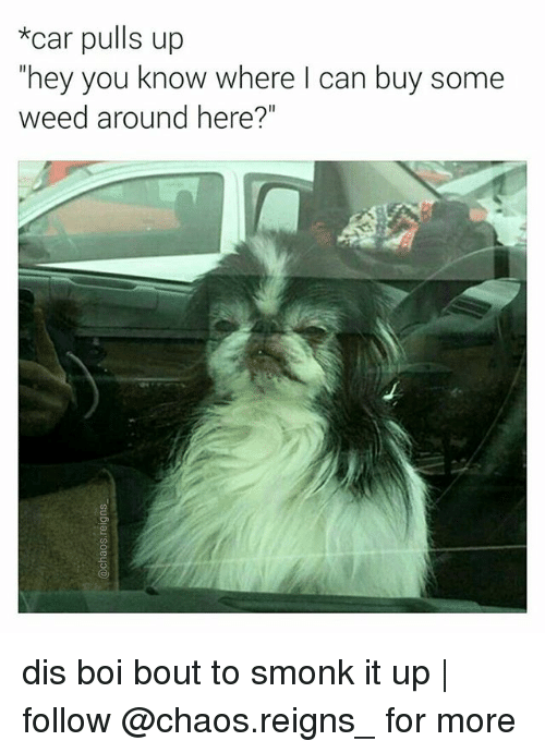 "Memes, Weed, and 🤖: car pulls up  hey you know where I can buy some  weed around here?"" dis boi bout to smonk it up 