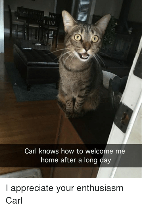 Funny, Appreciate, and Home: Carl knows how to welcome me  home after a long day I appreciate your enthusiasm Carl