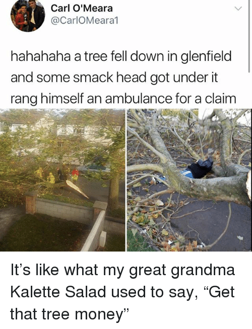"Grandma, Head, and Memes: Carl O'Meara  @CarlOMeara1  hahahaha a tree fell down in glenfield  and some smack head got under it  rang himself an ambulance for a claim It's like what my great grandma Kalette Salad used to say, ""Get that tree money"""
