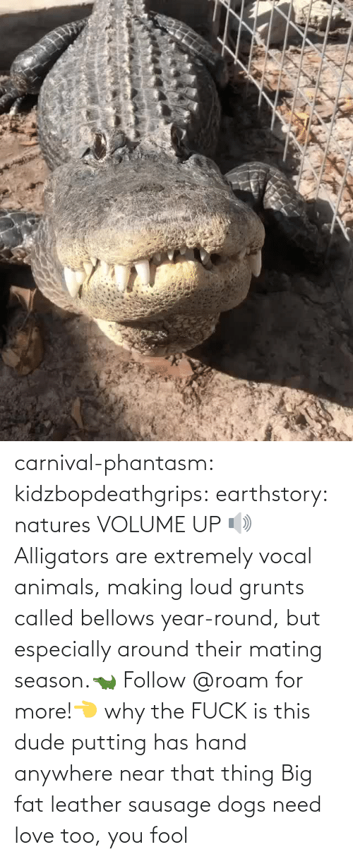 loud: carnival-phantasm:  kidzbopdeathgrips:   earthstory:  natures VOLUME UP 🔊 Alligators  are extremely vocal animals, making loud grunts called bellows  year-round, but especially around their mating season.🐊 Follow @roam for more!👈   why the FUCK is this dude putting has hand anywhere near that thing   Big fat leather sausage dogs need love too, you fool