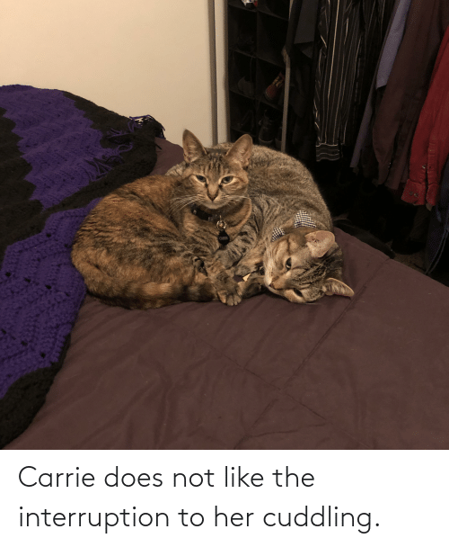 Interruption: Carrie does not like the interruption to her cuddling.