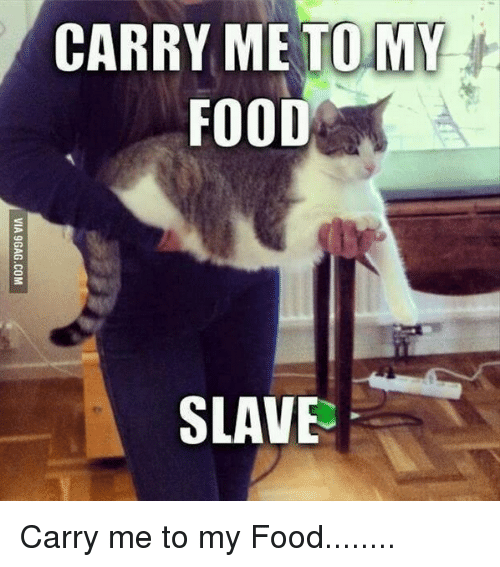 Food, LOLcats, and Carrie: CARRY ME TO MY  FOOD  SLAVE Carry me to my Food........