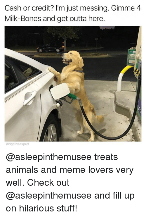 get outta here: Cash or credit? I'm just messing. Gimme4  Milk-Bones and get outta here.  @highfiveexpert @asleepinthemusee treats animals and meme lovers very well. Check out @asleepinthemusee and fill up on hilarious stuff!