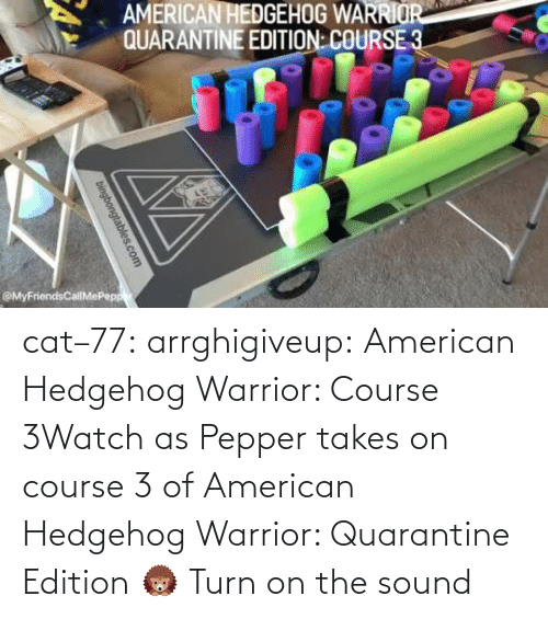 pepper: cat–77: arrghigiveup:   American Hedgehog Warrior: Course 3Watch as Pepper takes on course 3 of American Hedgehog Warrior: Quarantine Edition 🦔     Turn on the sound