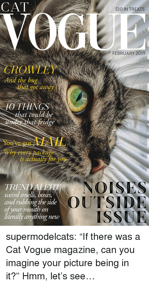 """vogue: CAT  $10 IN TREATS  FEBRUARY 2019  QIL  And the bug  CROWLEY  that got audy  10 THINGS  at couldbe  fridge  You've  gotMAIL  Why every package  is actually for you  NOISES  TREND  weird smell, boxes  and rubbing the side  oT your mouth on  literally anything new  OUTSID  ISSUR supermodelcats:  """"If there was a Cat Vogue magazine, can you imagine your picture being in it?"""" Hmm, let's see…"""