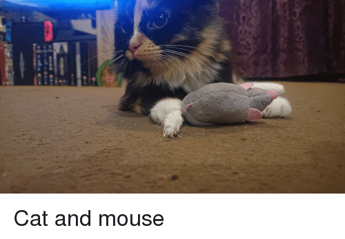 navi: Cat and mouse
