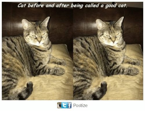 Good Cat: Cat before and after being called a good cat.  GEtf Postize