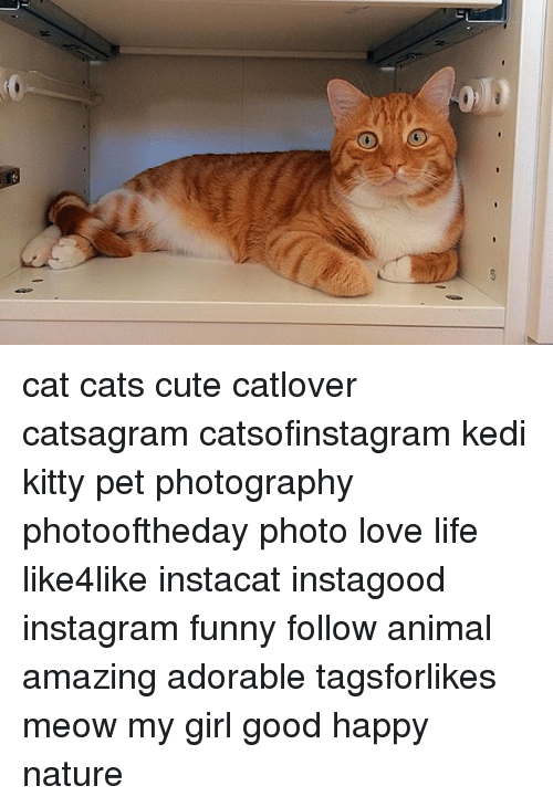 Cats, Cute, and Funny: cat cats cute catlover catsagram catsofinstagram kedi kitty pet photography photooftheday photo love life like4like instacat instagood instagram funny follow animal amazing adorable tagsforlikes meow my girl good happy nature