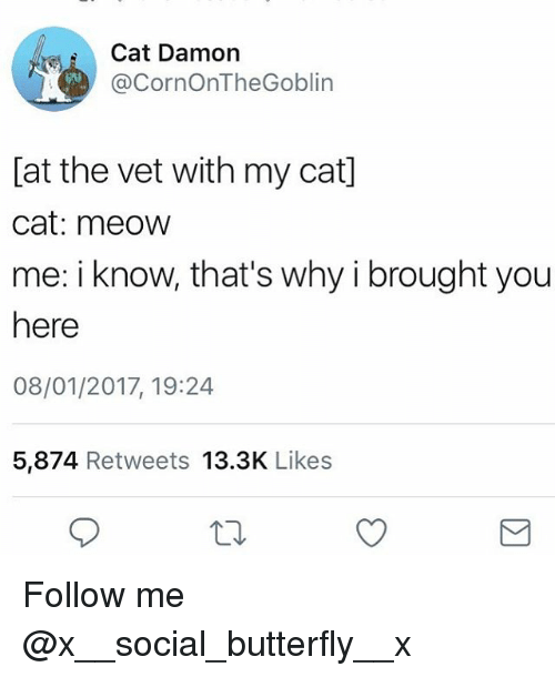 Memes, Butterfly, and 🤖: Cat Damon  @CornOnTheGoblin  [at the vet with my cat]  cat: meow  me: i know, that's why i brought you  here  08/01/2017, 19:24  5,874 Retweets 13.3K Likes Follow me @x__social_butterfly__x