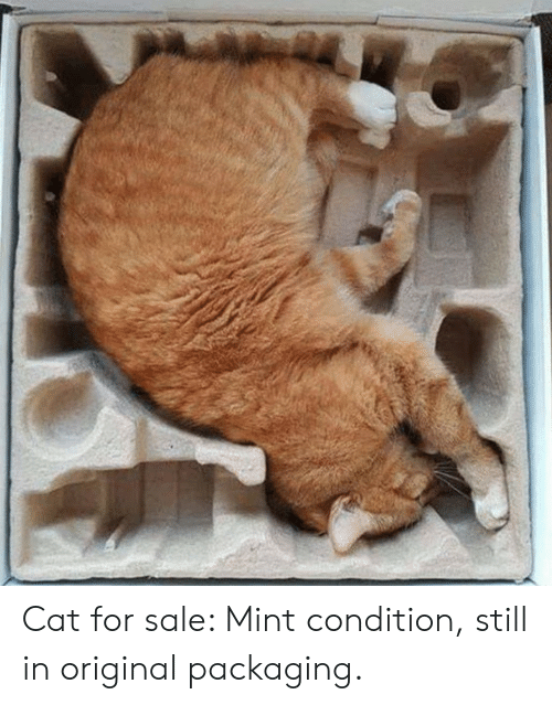 mint: Cat for sale: Mint condition, still in original packaging.