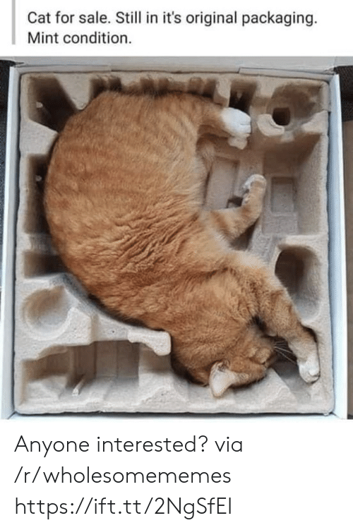 mint: Cat for sale. Still in it's original packaging.  Mint condition. Anyone interested? via /r/wholesomememes https://ift.tt/2NgSfEI