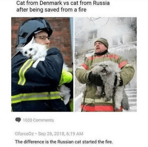 Denmark: Cat from Denmark vs cat from Russia  after being saved from a fire  1030 Comments  GforceDz  Sep 26, 2018, 6:19 AM  The difference is the Russian cat started the fire.