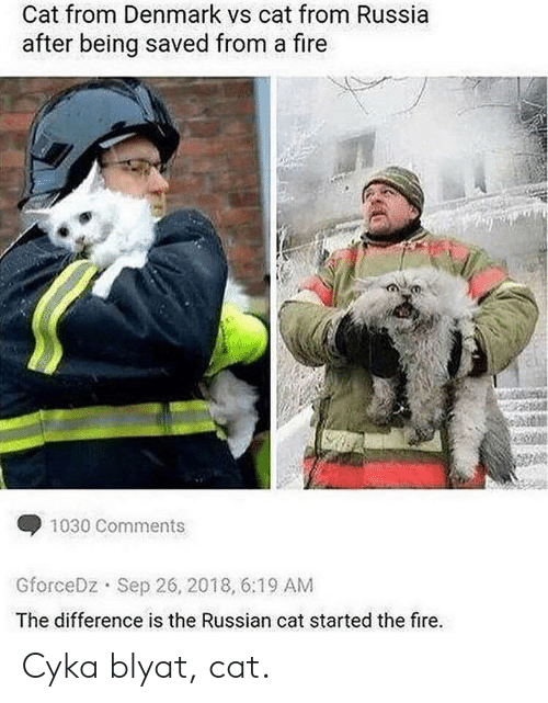 Cyka Blyat: Cat from Denmark vs cat from Russia  after being saved from a fire  1030 Comments  Sep 26, 2018, 6:19 AM  GforceDz  The difference is the Russian cat started the fire. Cyka blyat, cat.