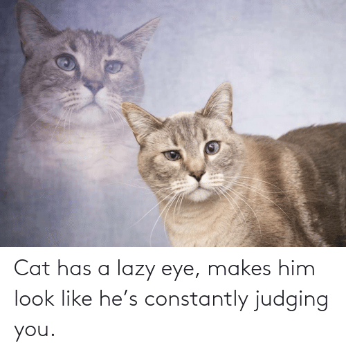 judging: Cat has a lazy eye, makes him look like he's constantly judging you.