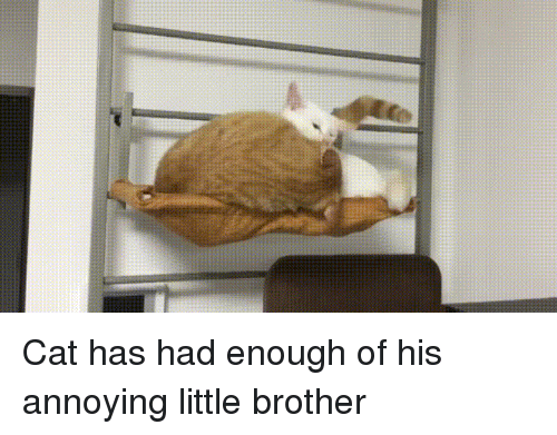 cat has had enough of his annoying little brother 25290170 🔥 25 best memes about annoying little brother annoying little