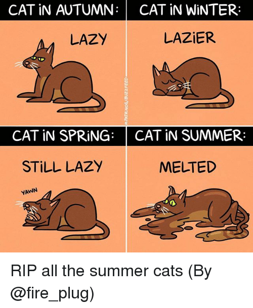 Cats, Fire, and Lazy: CAT iN AUTUMN: CAT iN WINTER:  LAZIER  LAZY  CAT iN SPRING: CAT IN SUMMER:  STILL LAZY  MELTED  YAWN RIP all the summer cats (By @fire_plug)