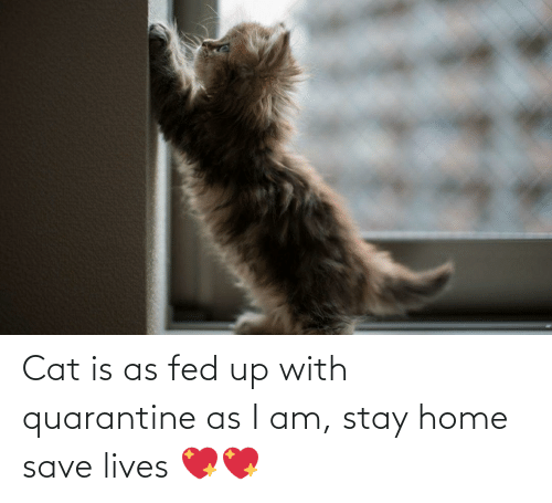 fed up: Cat is as fed up with quarantine as I am, stay home save lives 💖💖