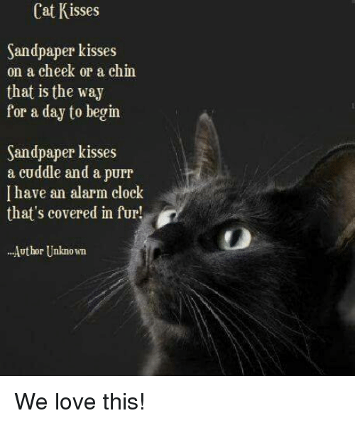 Memes, 🤖, and Cat: Cat Kisses  Sandpaper kisses  on a cheek or a chin  that is the way  for a day to begin  Sandpaper kisses  a cuddle and a purr  I have an alarm clock  that's covered in fur!  ...Author Unknown We love this!