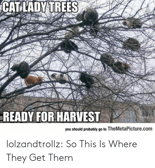 This Is Where: CAT LADY TREES  READY FOR HARVEST  you should probably go to TheMetaPicture.com lolzandtrollz:  So This Is Where They Get Them