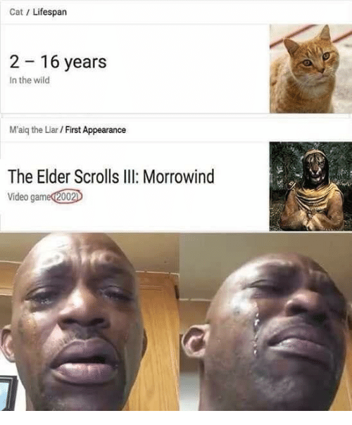 morrowind: Cat/ Lifespan  2 16 years  In the wild  M'aig the Liar / First Appearance  The Elder Scrolls II Morrowind  Video gamed2002