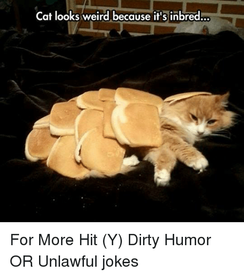 Cats, Memes, and Weird: Cat looks weird because it's inbred For More Hit (Y)  Dirty Humor  OR Unlawful jokes