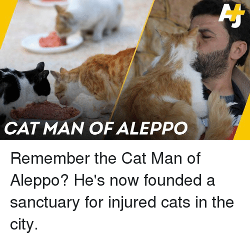 Cats, Memes, and 🤖: CAT MAN OF ALEPPO Remember the Cat Man of Aleppo? He's now founded a sanctuary for injured cats in the city.