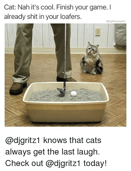 Cats, Memes, and Shit: Cat: Nah it's cool. Finish your game. I  already shit in your loafers  @highfiveexpert @djgritz1 knows that cats always get the last laugh. Check out @djgritz1 today!