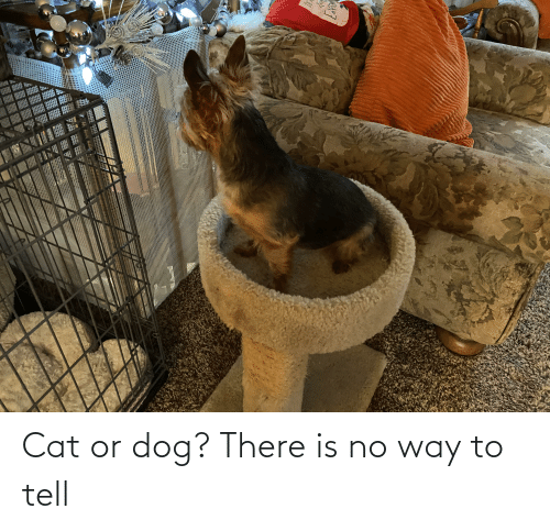 cat-or-dog: Cat or dog? There is no way to tell