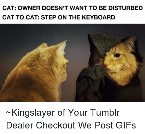 Cats, Dank, and Gif: CAT: OWNER DOESN'T WANT TO BE DISTURBED  CAT TO CAT: STEP ON THE KEYBOARD ~Kingslayer of Your Tumblr Dealer  Checkout We Post GIFs