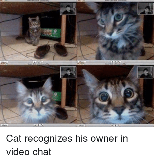 Cat Recognizes Owner On Video