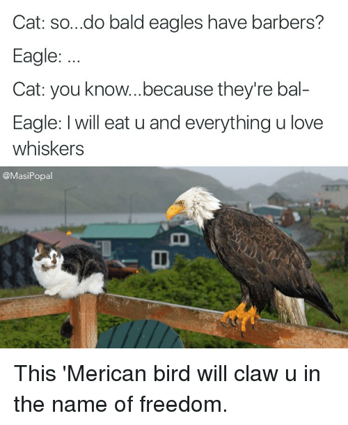 cat sodo bald eagles have barbers eagle cat you knowbecause they 39 re bal eagle l will eat u and. Black Bedroom Furniture Sets. Home Design Ideas