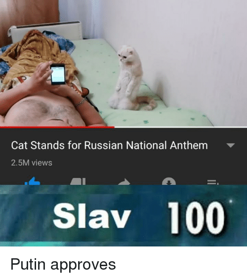 Slav: Cat Stands for Russian National Anthem  2.5M views  Slav 100 Putin approves