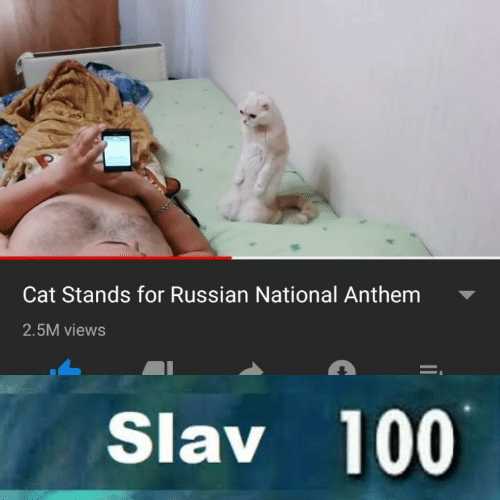 Slav: Cat Stands for Russian National Anthem  2.5M views  Slav 100