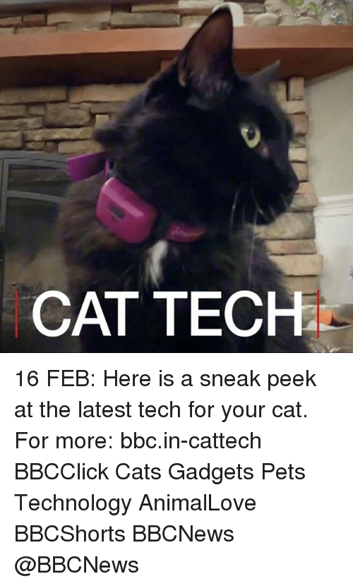 gadgets: CAT TECH 16 FEB: Here is a sneak peek at the latest tech for your cat. For more: bbc.in-cattech BBCClick Cats Gadgets Pets Technology AnimalLove BBCShorts BBCNews @BBCNews
