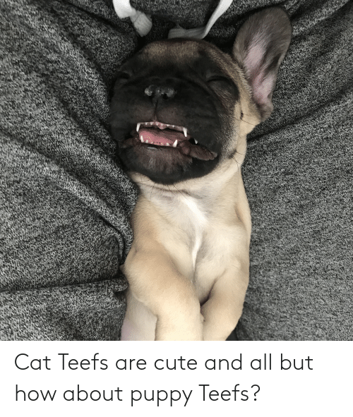 Teefs: Cat Teefs are cute and all but how about puppy Teefs?