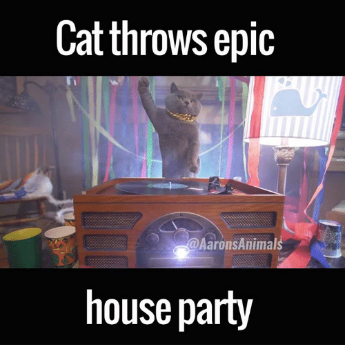 Memes, 🤖, and Epic: Cat throws epic  Aarons Animal  house party