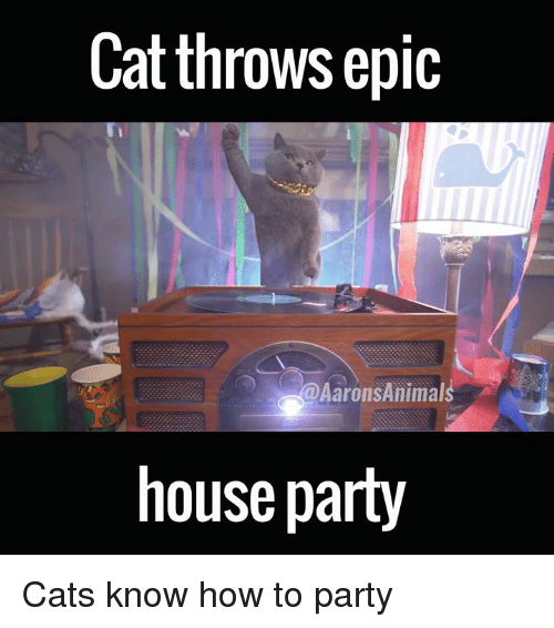 Memes, 🤖, and Epic: Cat throws epic  Aarons Animal  house party Cats know how to party