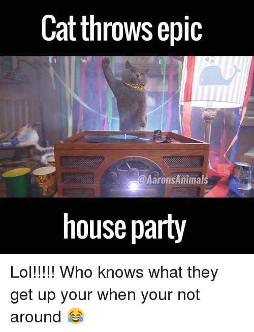 Memes, 🤖, and Epic: Cat throws epic  Aarons Animal  house party Lol!!!!! Who knows what they get up your when your not around 😂