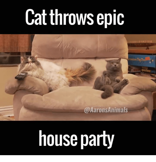 Memes, 🤖, and Epic: Cat throws epic  @Aarons Animals  house party