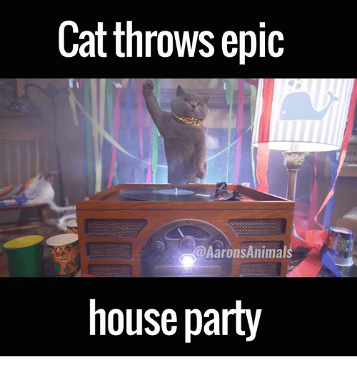 Memes, 🤖, and Epic: Cat throws epic  Aarons Animals  house party