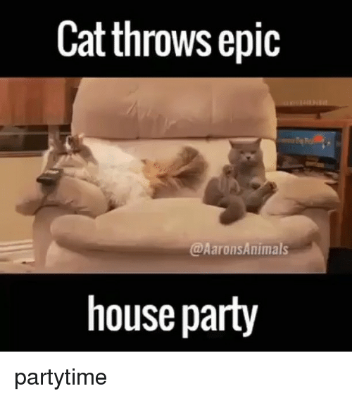 Memes, 🤖, and Animal House: Cat throws epic  @Aarons Animals  house party partytime