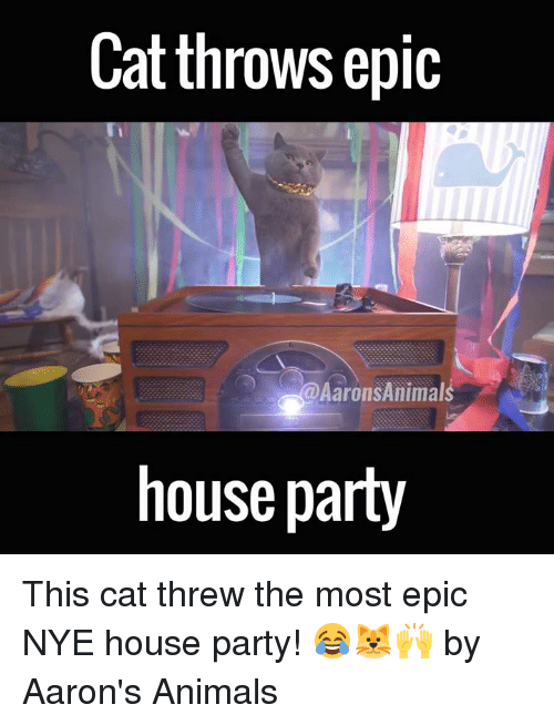 Dank, 🤖, and Epic: Cat throws epic  Aarons Animals  house party This cat threw the most epic NYE house party! 😂🐱🙌  by Aaron's Animals
