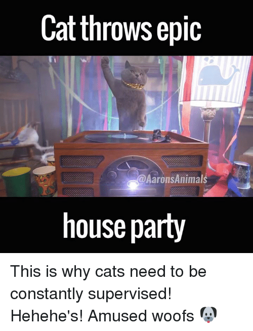 Memes, 🤖, and Epic: Cat throws epic  Aarons Animals  house party This is why cats need to be constantly supervised! Hehehe's! Amused woofs 🐶