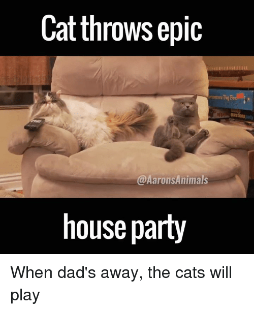 Memes, 🤖, and Epic: Cat throws epic  @Aarons Animals  house party When dad's away, the cats will play