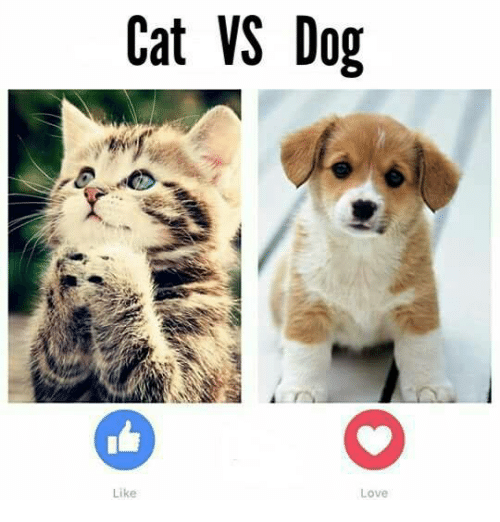 cat v dog Cat vs dog is a brand new designed classic game, cool to play and free throw bones over the barrier to hit the cat use the special props to increase the attack power.